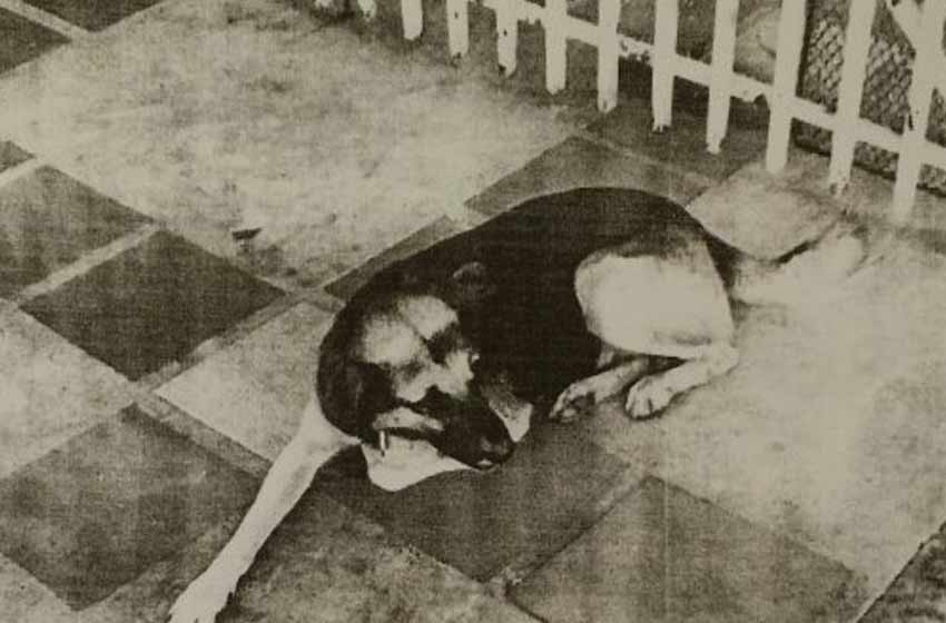 Ordenan la captura de un perro — Misiones